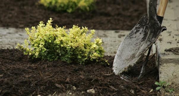 mulch in a garden